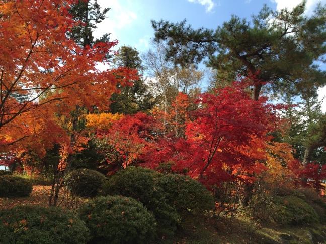 蓼科湖の紅葉 2014年11月