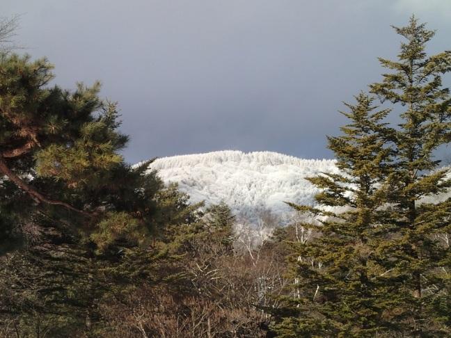 雪の八子ヶ峰2