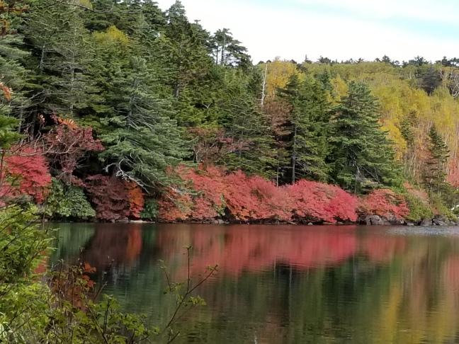 紅の連なる白駒湖岸 (2017.10.5)